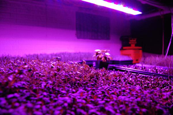 led در کشاورزی
