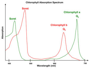 OOS Chlorophyll absorption